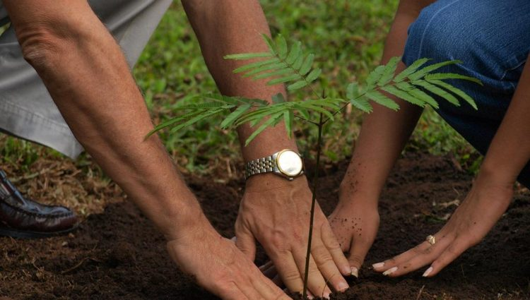 The Basics of Planting a Tree