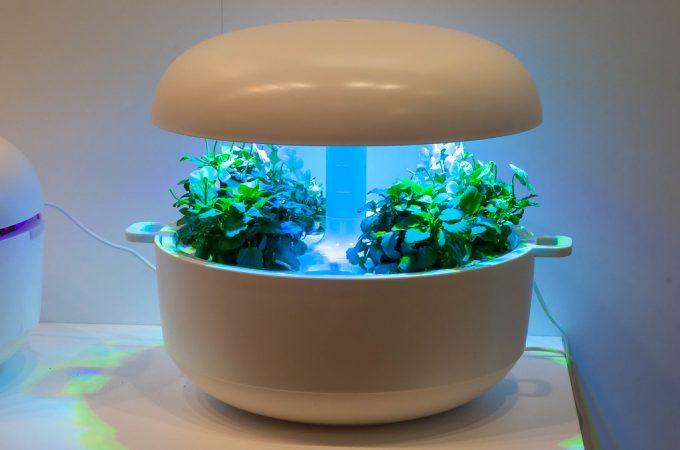 3 Smart Gardens – The future of growing plants indoor?